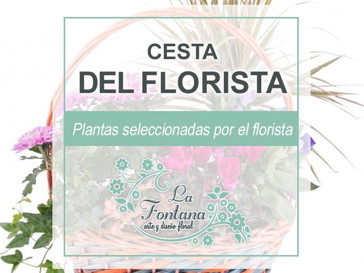 Cesta de Plantas del Florista